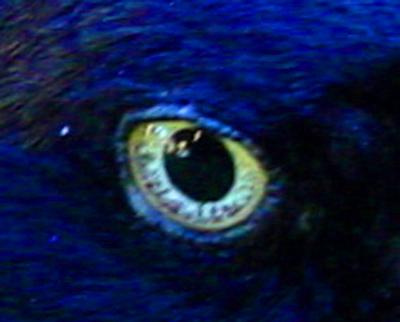 http://draves.org/pix/clip/DSC04995eye.jpg